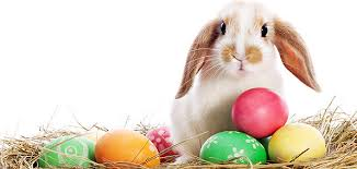 bunny easter why you should believe in the easter bunny