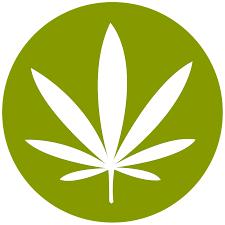 drawn cannabis canadian flag pencil and in color drawn cannabis