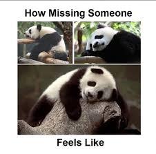 Missing Someone Meme - how missing someone feels like panda