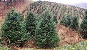 Pacific Northwest Christmas Tree Association - about christmas tree farms hobby farms