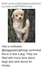 Confused Dog Meme - 25 best memes about confusion confusion memes