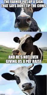 Cow Memes - bad pun cow imgflip