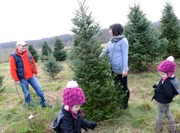 where to cut your own christmas tree in lancaster county local