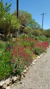 151 best xeriscape ideas images on pinterest gardening
