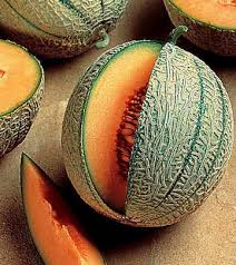 Growing Melons On A Trellis Mini Love Hybrid Watermelon Seeds From Park Seed