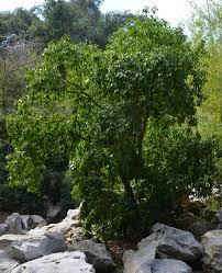 ufei selectree a tree selection guide