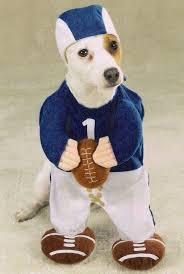 Funny Halloween Costumes Cats 25 Dog Football Costume Ideas Puppy Halloween