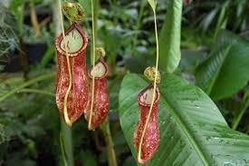 List Of Tropical Plants Names - 7 strangest rainforest plants javi u0027s travel blog go visit