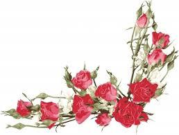 Rose Petals Rose Petals Vector Free Vector Download 1 756 Free Vector For