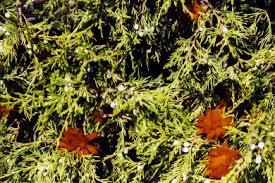 Rust Disease On Plants - plant diseases