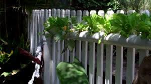 beautiful backyard aquaponics youtube