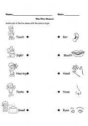 five senses worksheets free worksheets library download and
