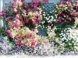 wall rose trellis u2014 indoor outdoor homes best rose trellis ideas