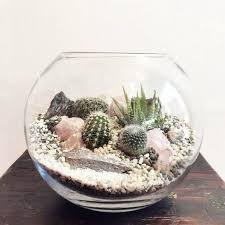 cactus terrarium u2013 laidback gardener