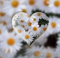 daisy heart twitter hearts pinterest twitter flowers