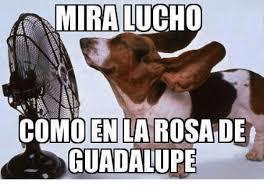 Rosa De Guadalupe Meme - miralucho como en la rosa de guadalupe meme on me me