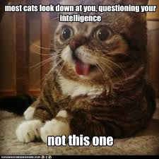 Stupid Animal Memes - most cats look down at you lolcats lol cat memes funny cats