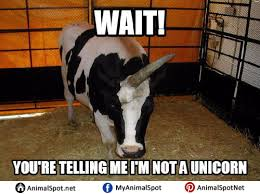Cow Memes - pictures of cow memes png