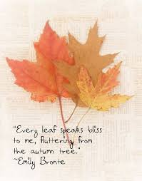 fall leaves autumn emily bronte quote shadetree photography