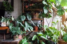 fertilizing houseplants 101 u2014 homestead brooklyn
