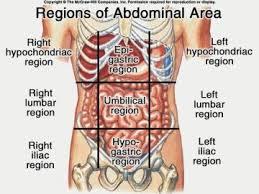 Abdominal Anatomy Quiz Exam 1 Modified Quiz Anatomy U0026 Physiology 365 With Minnis At
