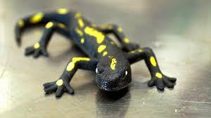 salamander k che was macht mit einem salamander in der küche