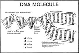 genetics and the life process cqr