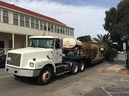 file palm tree delivery in the presidio san francisco jpg