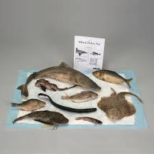 preserved mixed fish set carolina com