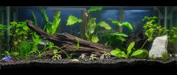 20 gallon planted tank all the pages are my days