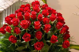 wallpaper flower red rose flowers beautiful flowers rose red roses flower wallpaper 3d hd for