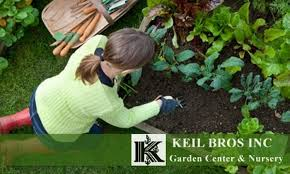 Nursery Plant Supplies by 60 Off Plants And Supplies At Keil Bros Keil Bros Garden Center