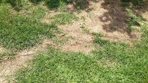 concimazione tappeto erboso come riparare il prato bruciato dal concime consigli per fare il