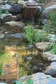 native plants san francisco kathy kramer and michael may u0027s garden bringing back the natives