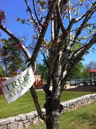 honor someone with a tree trees atlanta