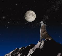 wolf howling at moon photograph by lund