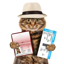 traveling with cats images Cats on a plane jpg