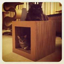 Modern Design Cat Furniture by 193 Best Catopia Images On Pinterest Cat Stuff Cats And Cat