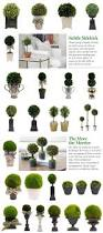 Preserved Boxwood Topiary Trees Inspiration Ideas For Topiary Arrangements From Onekingslane