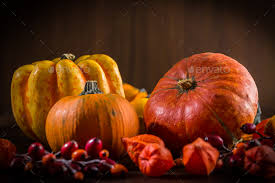 pumpkin still for thanksgiving stock photo by brebca photodune
