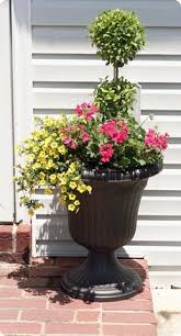 Topiary Balls With Flowers - eugenia topiary 2 ball from wal mart for 12 part sun white