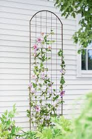 best 25 climbing flowers trellis ideas on pinterest climbing