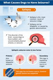 what causes seizures in dogs canna pet