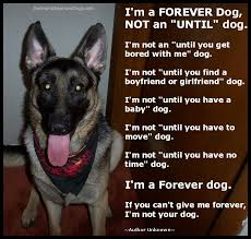 belgian malinois quotes shelter dog poem sad shelter dog poem forever dog poem jpg