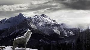 Mountains Wolf In The Mountains Thinglink