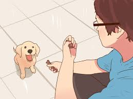 how to buy a puppy with pictures wikihow