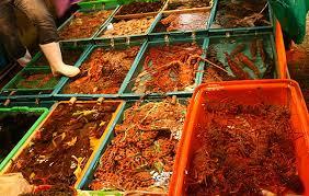 cuisiner des brocolis surgel駸 comment cuisiner des brocolis surgel駸 100 images 武隆山体