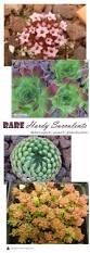 254 best houseplants images on pinterest indoor gardening