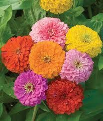 99 best flower seeds images on pinterest flower seeds flower