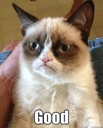 Angry Cat Meme Good - good angry cat quickmeme